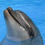 Дельфинарий. Шоу дельфинов и морских котиков